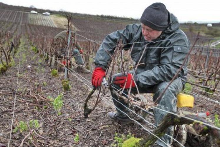 Ouvriers viticoles H/F X2